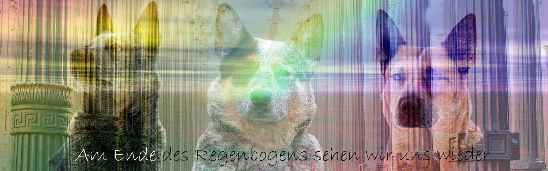 Regenbogen Hunde 1